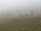 Ponies In The Mist by Ol Mole in Trail & Blazes in Virginia & West Virginia