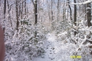 Snow Covered by bronconite in Views in Maryland & Pennsylvania