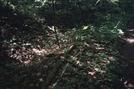 Snake Again by Phoenixdadeadhead in Thru - Hikers