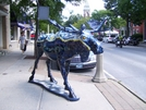 Wild Moose In Bennington by squeeze in Moose