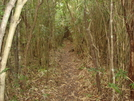 Bamboo Trail by World-Wide in Other Trails