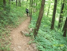Springer To Unicoi by 58starter in Section Hikers