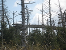 Clingman Dome by 58starter in Section Hikers