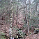 Feb Sheltowee Trace Hike by 58starter in Other Trails