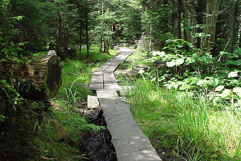Bog bridges