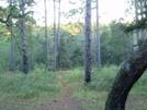Citrus Trail
