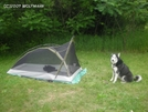 Luka And Tent by Wolfmaan in Other Trails