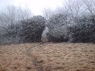 Near Spence Field by iceberg11 in Trail & Blazes in North Carolina & Tennessee
