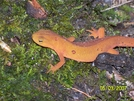Loved the newts