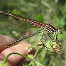 Dragon Fly Seen along Ice Age Trail by Different Socks in Other Trails