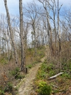 Along The Tn/nc Line by Bezekid609 in Section Hikers