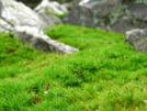 Macro Moss by Bezekid609 in Views in Maryland & Pennsylvania