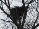 Eagles Nest by eric j in Birds