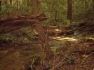 Justus Creek by MkBibble in Trail & Blazes in Georgia