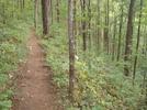 Trail Between Gooch Gap And Woody Gap