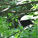 beagle gap to ivy creek overlook 201