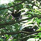 beagle gap to ivy creek overlook 210 by Deer Hunter in Bears