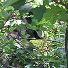beagle gap to ivy creek overlook 269 by Deer Hunter in Bears