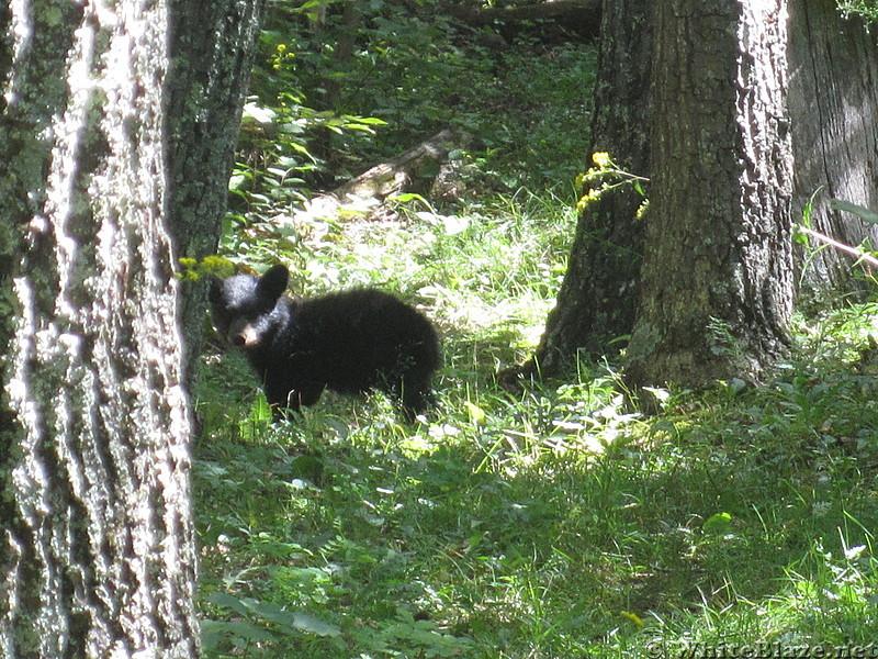 Big Run and Patterson Ridge trails' loop hike in Shenandoah National Park