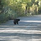 colorado trip 2012 183 by Deer Hunter in Bears