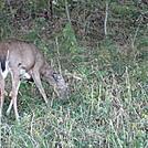 Rapidan Camp loop hike via Big Meadows by Deer Hunter in Other Trails