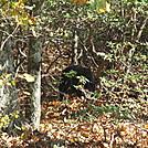 snp 10-11 035 by Deer Hunter in Bears