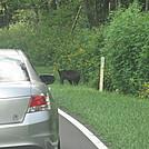 wildcat ridge loop hike 096 by Deer Hunter in Trail & Blazes in Virginia & West Virginia