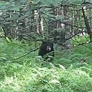 wildcat ridge loop hike 103 by Deer Hunter in Trail & Blazes in Virginia & West Virginia