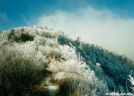 ice-covered trees in the Smokies by sienel in Trail & Blazes in North Carolina & Tennessee