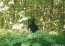 New Jersey bear by sienel in Bears
