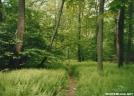 Pennsylvania ferns by sienel in Trail & Blazes in Maryland & Pennsylvania