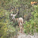 fire island buck by nyrslr21 in Views in New Jersey & New York