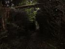 Roan Mt. by plush neon monkey in Trail & Blazes in North Carolina & Tennessee