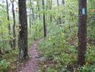 Blue Blazed Approach Trail by Woodenarrows in Approach Trail