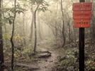 Trail2 by LimpsAlong in Members gallery