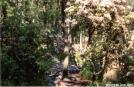 Mtn Laurel in bloom in MD by Jumpstart in Trail & Blazes in Maryland & Pennsylvania