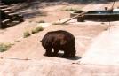 Poor Bear..in the Trailside museum by Jumpstart in Bears