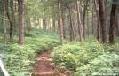 Green Green Mountains by Jumpstart in Trail & Blazes in Vermont