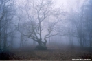 Bly Gap Oak Tree, NC by Jumpstart in Trail & Blazes in North Carolina & Tennessee