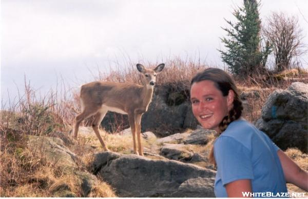 Very close encounters with deer