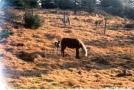 Wild Ponies by Jumpstart in Other