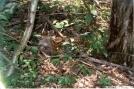 newborn fawn in the shenandoahs by Jumpstart in Deer