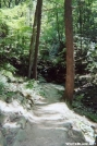 Trail by Shanollie2003 in Trail & Blazes in New Jersey & New York
