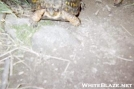 Turtle by Shanollie2003 in Other