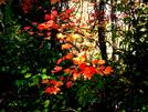Hiking In Arcadia by datadog314 in Members gallery
