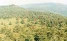 Mt Rogers by Scaper in Views in Virginia & West Virginia