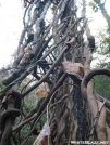 Climbing Vines Near Newfound Gap by Reverie in Views in North Carolina & Tennessee