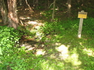 Piped Spring At Cow Camp Gap Shelter by Hobbler in Virginia & West Virginia Shelters