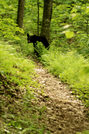 Bear In The Smokies