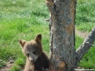 DSC01306 by azchipka in Bears